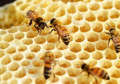 FSE – Corso di apicoltura AVANZATO